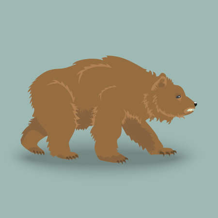 kodiak: Kodiak wild angry bear . Icon of brown bear