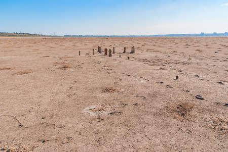 Petrified tree stubs on the bank of the salty lake, Kuyalnik, Ukraine