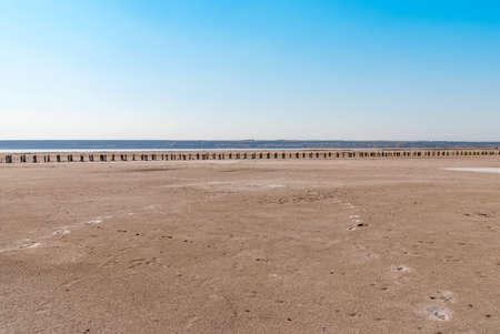 Petrified tree stubs on the bank of the salty lake, Kuyalnik, Ukraine. Global warming, climate change