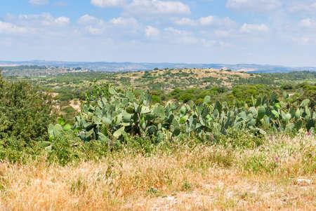 Judean Hills near Beit Shemesh