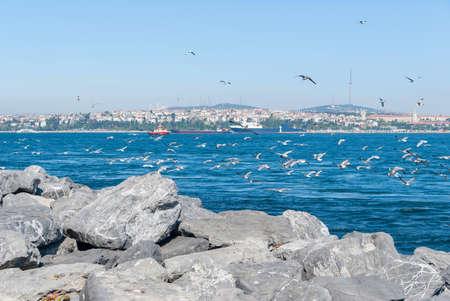 Gulls fly over Bosporus, Istanbul