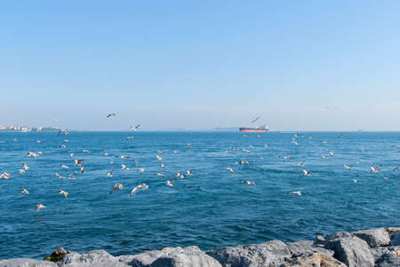 Ships and seagulls on Istanbul Bosphorus sea Stock Photo