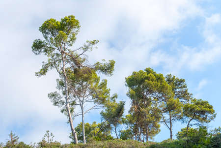 A beautiful landscape,trees amid a clear blue sky in the suburbs