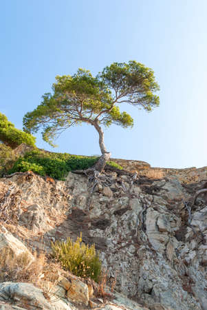 Tree over a cliff covered with dry plants and roots in Catalonia Spain Stockfoto
