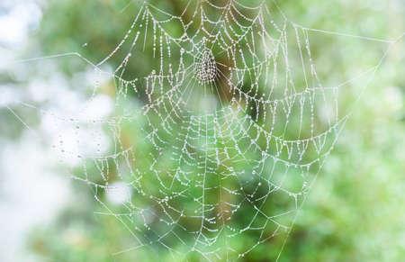 The spider web cobweb closeup background.