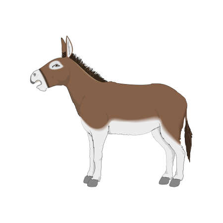 Cute Donkey Vectoral Illustration. White Background Isolated.