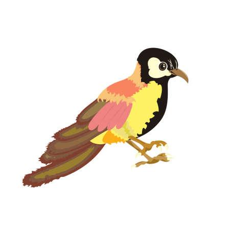 Golden Oriole isolated on white background. One sitting bird. Vector flat illustration. 矢量图像