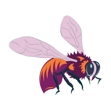 Vector illustration of flying honey bee on white background