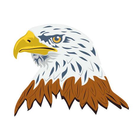 Portrait of a bald eagle lat. haliaeetus leucocephalus , isolated on white background. Vector