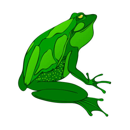 Bright green big frog drawing vector. isolated on white background. 矢量图像