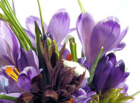 crocuses: Crocuses and some other spring flowers
