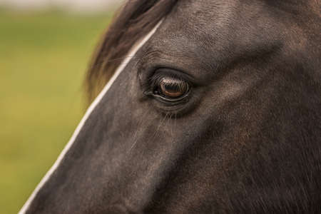 to tinker: Eye of a Tinker horse