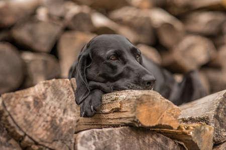 wood pile: dog on wood pile