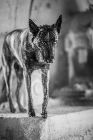 herder: Herder