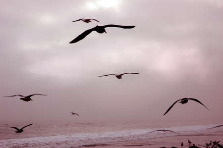 Seagulls flying over the surf photo