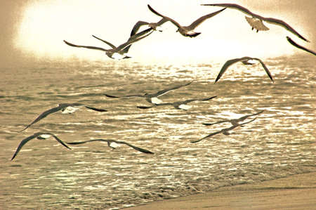 spaciousness: Sepia colored flying gulls at beach Stock Photo