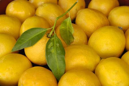 Freshly picked lemon with leaf in bowl of lemons (soft focus on outer lemons)