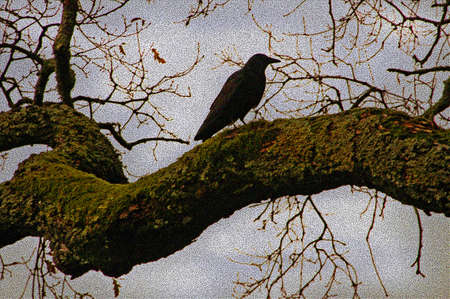 Painting like silhouette of large crow on oak tree branch Stock Photo - 302507