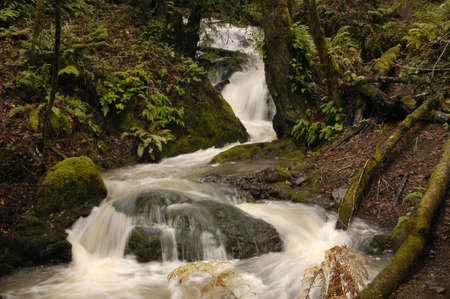 Stream rushing through a Northern California forest. Stock Photo - 302505