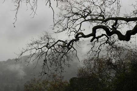 Vista from an oak tree of misty mountain Imagens