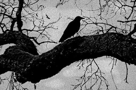 Crow in tree ,Black & White Stock Photo - 319618