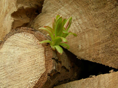 A small shoot grows from a dead log