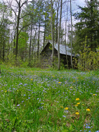 shack: A beautiful forest shack in the woods at springtime Stock Photo