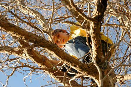 Young boys hides up in a  tree