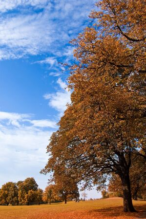 beautiful autumn landscape is shown Stock Photo - 5665460