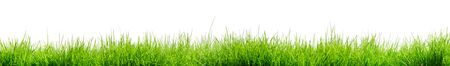 Fresh green isolated grass