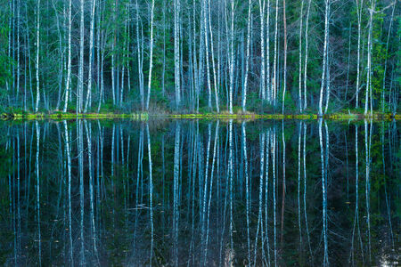 Forest reflections from calm water photo