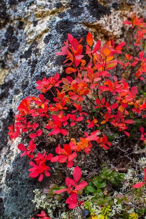 Autumnal colors Stock Photo - 34718461
