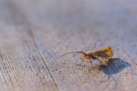 Fly on old wooden table Stock Photo