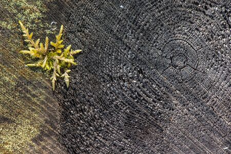 Details of tree stump and moss
