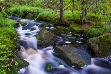 Wild stream in forest