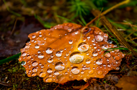 Autumn leaf and water drops Stock Photo