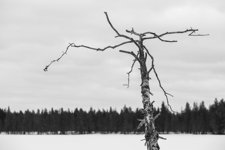 Dead tree in winter landscape Stock Photo