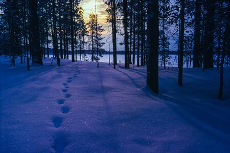 Animal path in dark winter forest