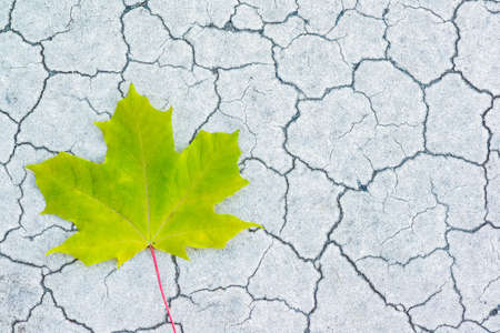 Maple leaf on cracked stone Stock Photo