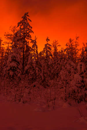 Red winter night Stock Photo