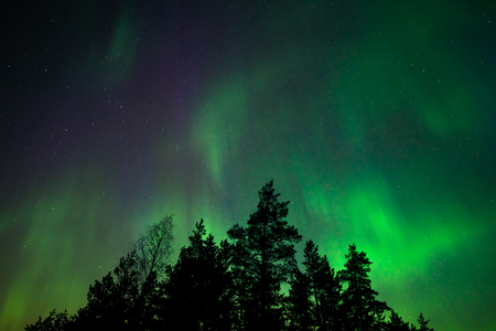 Northern lights and trees Stock Photo