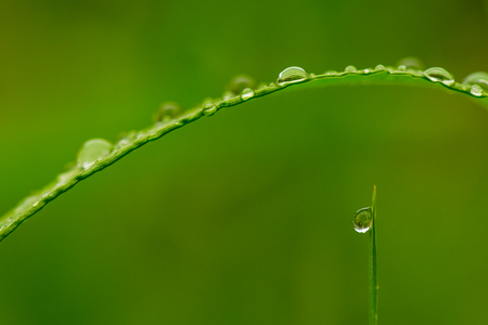 Closeup of morning dew in grass