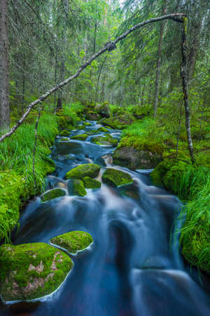 Flowing stream in forest Stock Photo