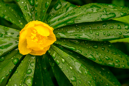 Yellow flower on green plant Stock Photo