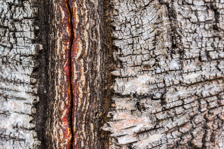 Closeup of groove in birch tree trunk Stock Photo