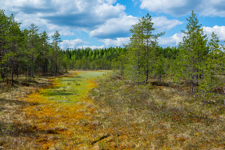 Colorful bog landscape Stock Photo