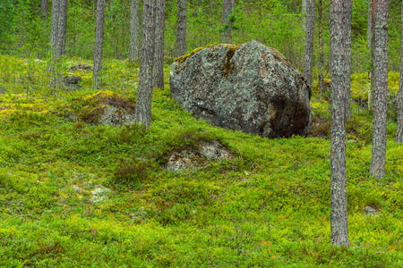 Big rock in forest landscape