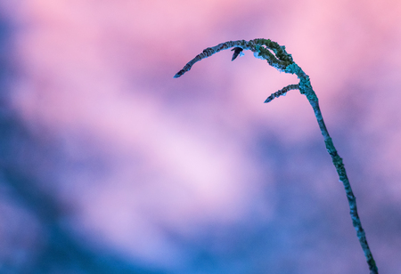Closeup of small tree branch and colorful sunset colored backgrounds Stock Photo