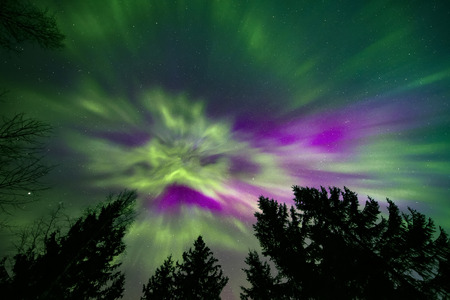Colorful northern lights corona and treetops
