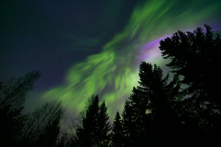 Colorful northern lights and treetops Stock Photo
